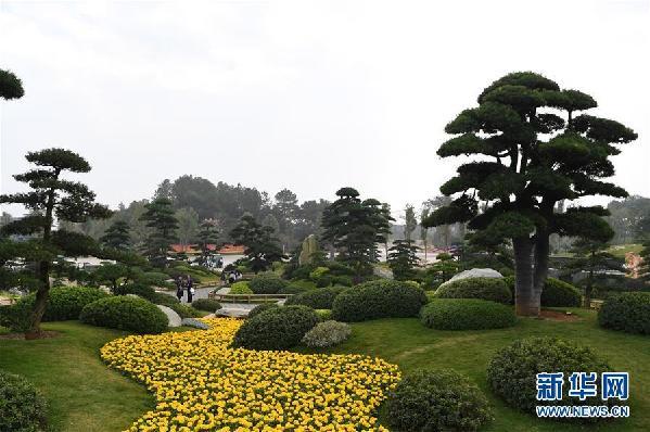 (社会)(5)第十二届中国(南宁)国际园林博览会开幕