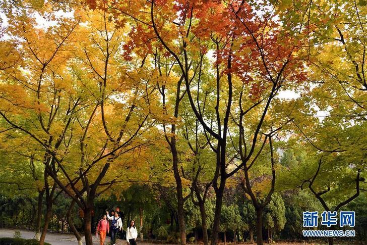 (美丽中国)(1)红叶谷秋色