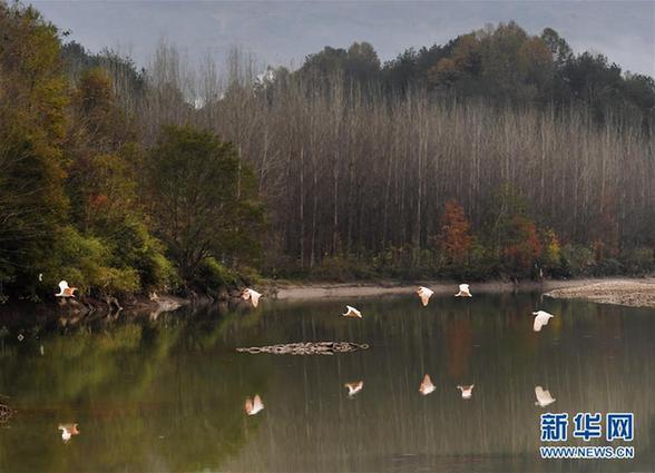 (环境)(4)冬季到汉江赏朱鹮