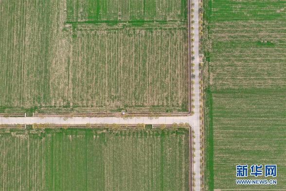 (环境)(1)俯瞰绿色麦田