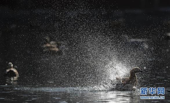 (环境)(3)冬日戏水