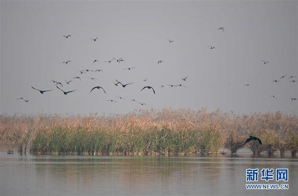 (美丽中国)(2)黄河湿地景如画