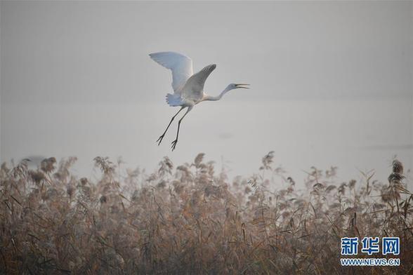 (美丽中国)(4)黄河湿地景如画