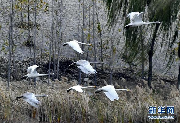 (美丽中国)(3)济南:黄河之滨景色美