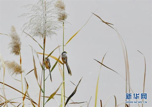 (美丽中国)(7)济南:黄河之滨景色美