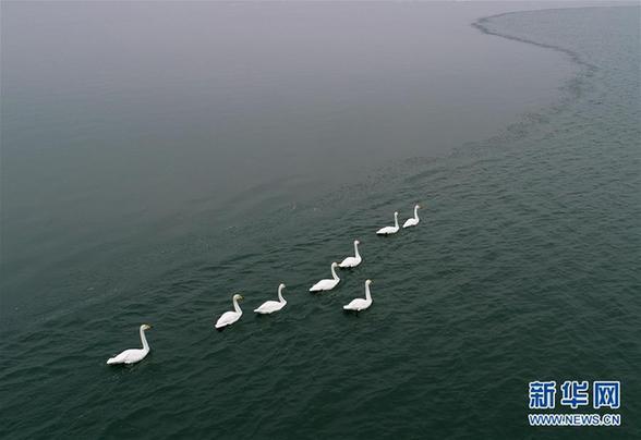 (美麗中國)(1)紅堿淖上冬來客