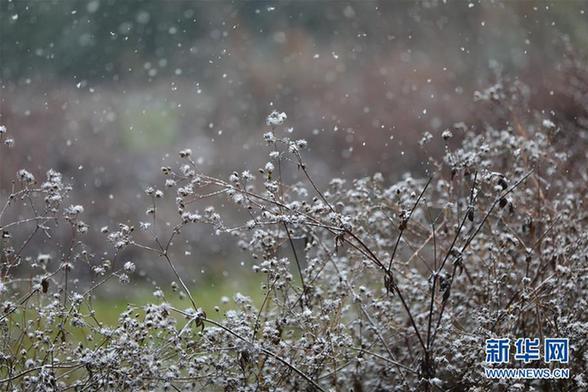 (新华网)(2)贵州西部地区迎来降雪天气