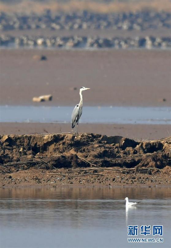 (环境)(2)江西:大美南矶迎候鸟