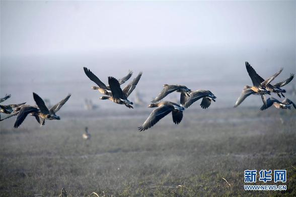 (环境)(3)江西:大美南矶迎候鸟