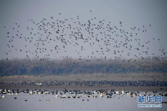 (环境)(4)江西:大美南矶迎候鸟