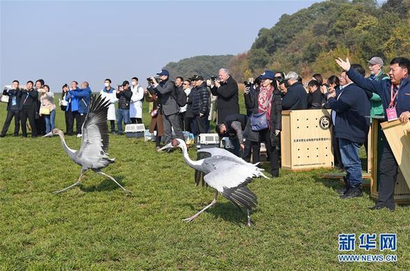 (環境)(1)120只珍稀候鳥放飛鄱陽湖