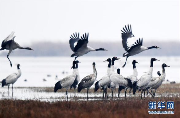 (环境)(4)贵州草海迎来大批越冬候鸟