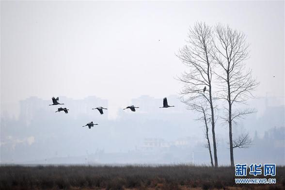 (环境)(5)贵州草海迎来大批越冬候鸟
