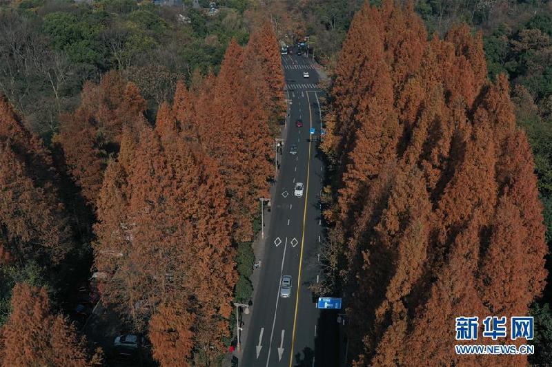 (美丽中国)(1) 冬日西湖色彩斑斓