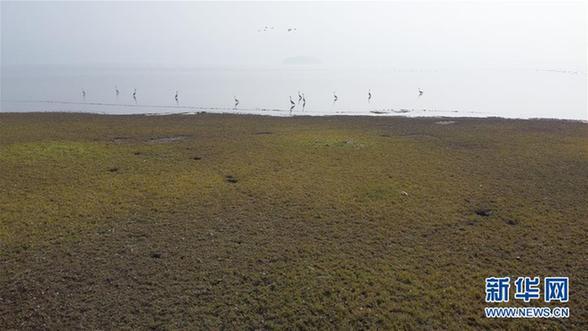 (环境)(5)安徽:冬日湿地 候鸟纷至
