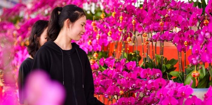 澳门拉斯维加斯赌博琼山区云龙镇扶贫花卉展欢迎您参与