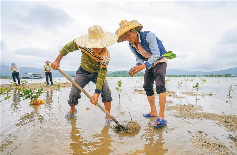 海南:退塘增绿