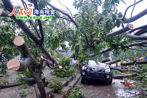 """""""纳沙""""肆虐 海口两轿车被刮倒大树砸变形[图]图片"""