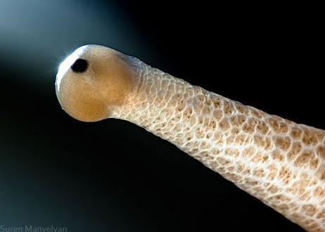 神奇动物之眼!你看得出几个?意思梦见蟒蛇咬人是什么孕妇图片