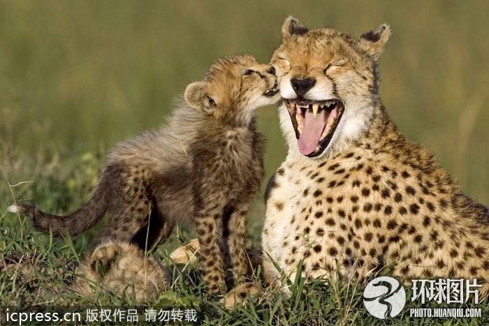 情暖人心!动物世界温馨亲子照