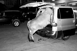 开车偷牛路遇独行少女 4贼将其拖上车强暴
