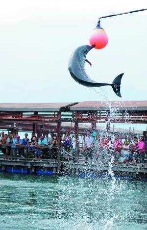分界洲岛上的海豚表演很受游客欢迎