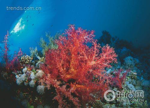 美丽的海底珊瑚树