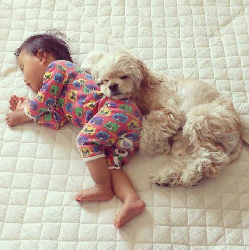 男孩与宠物的成长
