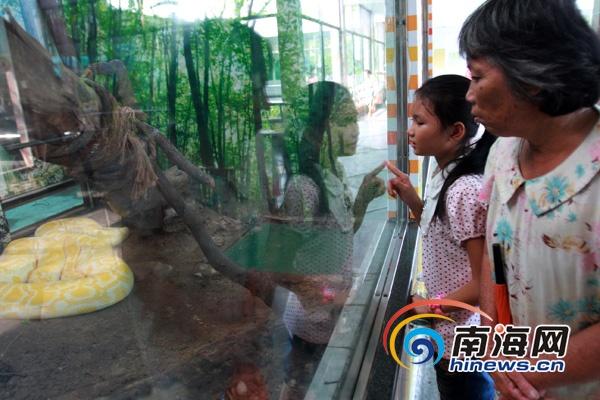 动物园内的大蟒蛇吸引小蝶和奶奶驻足观看(南海网记者陈望摄)