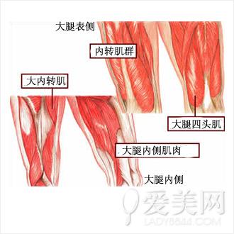 3组最好动作告别收紧效果肌肉拉伸瘦腿腿_减健身减肥大腿几点大象图片