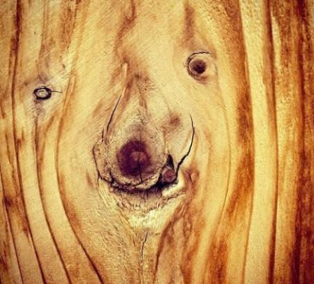 动物搬木头 看图作文