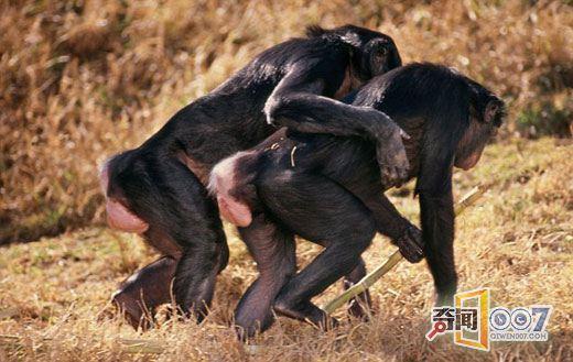 人与动物之性_十大动物性行为大全:乌贼交配一次持续24小时图片频道-海口网