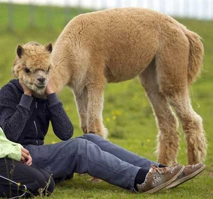 盘点动物模仿人类