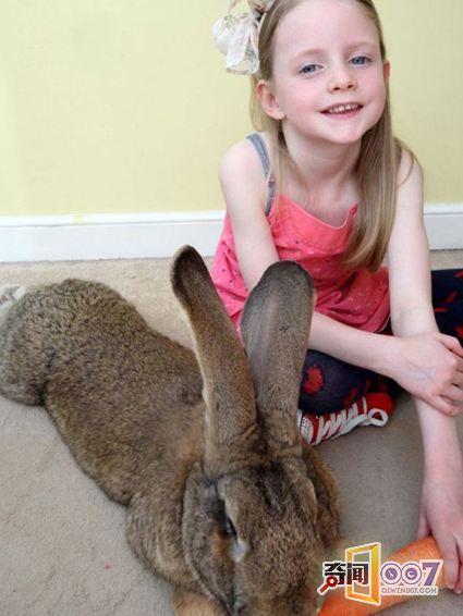 世界上最大的兔子:一年吃掉4000根胡萝卜