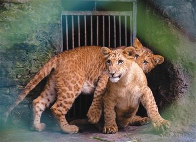 野生动物园里的爱奇遇