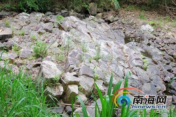 海南省白沙黎族自治县一处形成约1亿年前的大型花岗斑岩柱状节理群