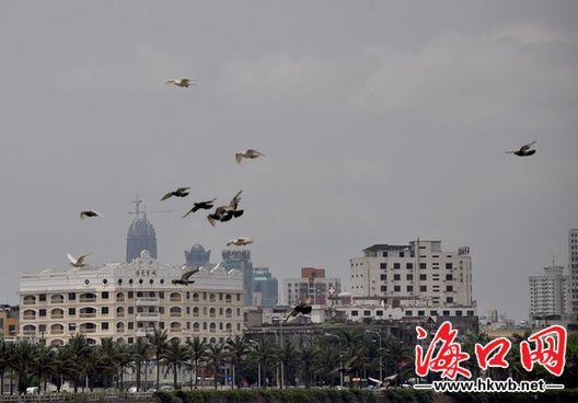 现场 飞翔/溪边飞翔的白鸽真美![图]