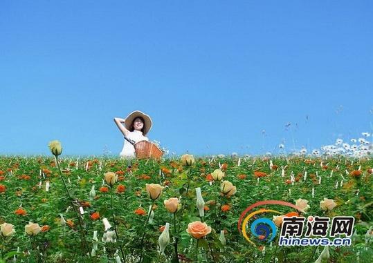 三亚玫瑰谷12月12日开园 将打造玫瑰风情小镇