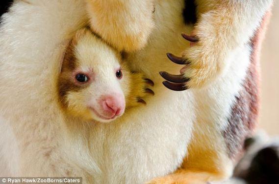 世界最濒危动物宝宝照片[组图]