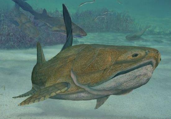 云南发现4.2亿年前古鱼 首次完整呈现人类脸部骨骼结构