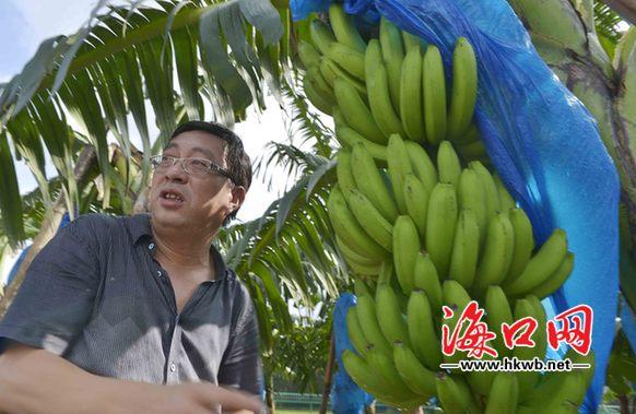 香蕉内部结构图