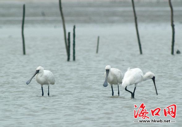 呼吁拒绝食用野鸟保护环境