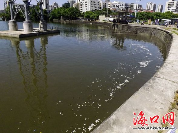 海口红城湖死鱼已打捞干净