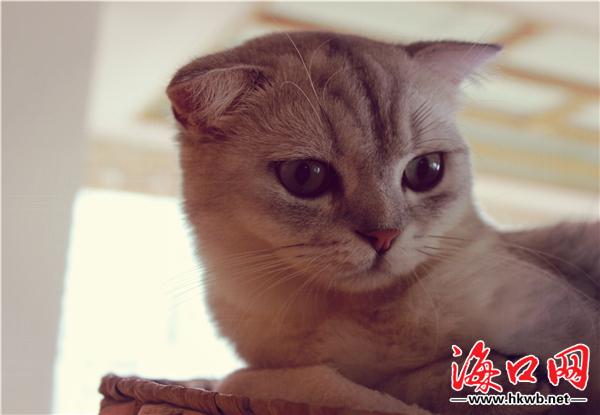 饭后猫会用前爪擦擦胡子,被人抱后用舌头舔舔毛.