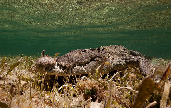摄影师拍摄的水下动物世界