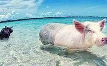世界上唯一的粉色沙滩免签了!