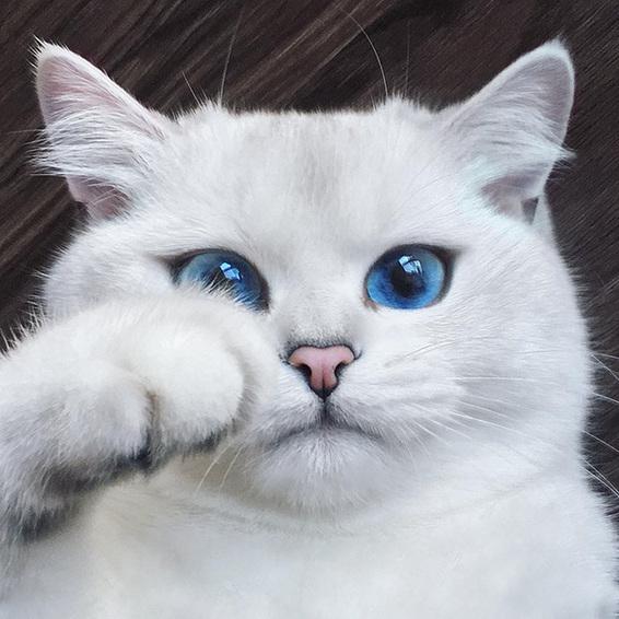 全球最美的动物图片