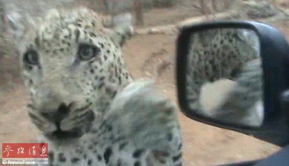 尴尬还是害怕?野生动物袭击人类瞬间
