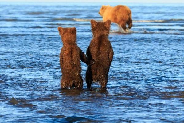 这两只小熊的背影看上去非常萌