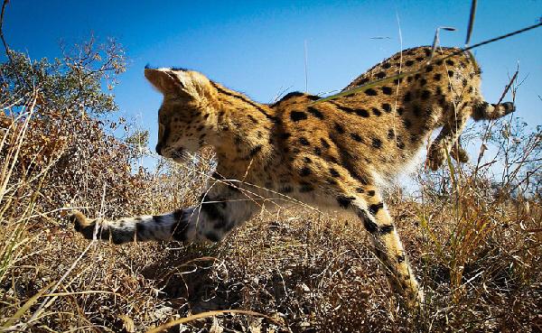 bbc纪录片记录全球最美动物(组图)